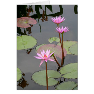 Pink Water Lilies Card