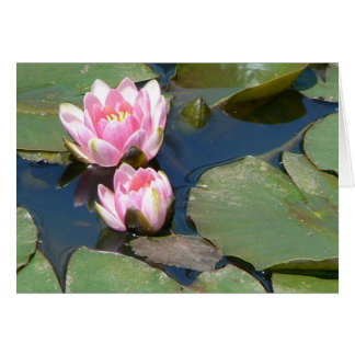 Pink Water Lillies Greeting Cards