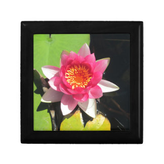 Pink water Lilly photograph Jewelry Boxes