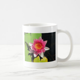 Pink water Lilly photograph Classic White Coffee Mug