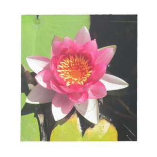 Pink water Lilly photograph Scratch Pad