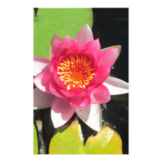 Pink water Lilly photograph Stationery Paper