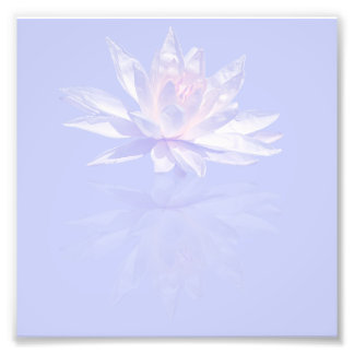 Pink Water Lily and Reflection over Lavender Photo Art