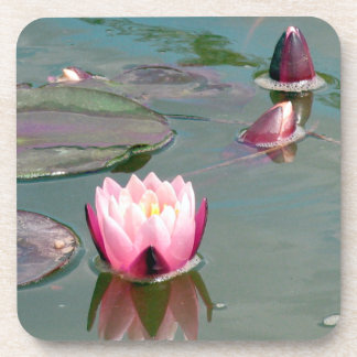 Pink water lily coaster