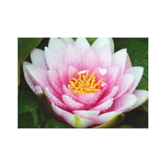 Pink water lily floral print