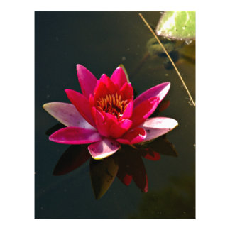 Pink Water Lily Flower Full Color Flyer
