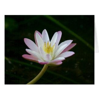 Pink water lily flower, Photo Big Greeting Big Greeting Card
