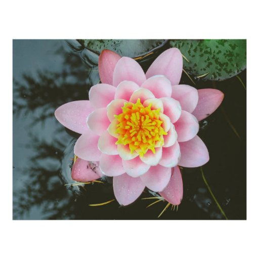 Pink water lily flyer design