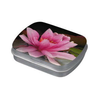 Pink Water Lily Jelly Belly Candy Tins