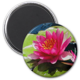 Pink Water Lily Magnets