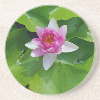 Pink Water Lily On Green Pads Photography Beverage Coaster