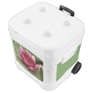 Pink waterlily rolling cooler