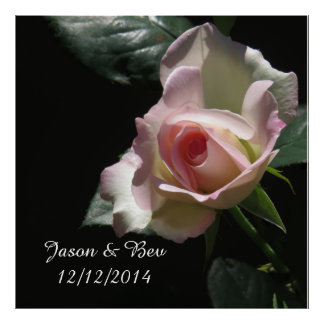 Pink Wedding Rose Posters