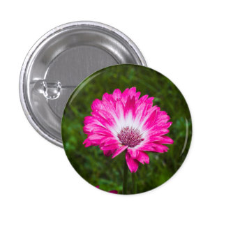 Pink & White Gerbera Daisy in Bloom 3 Cm Round Badge