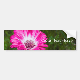 Pink & White Gerbera Daisy in Bloom Bumper Sticker