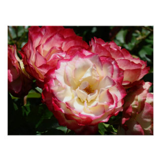 PINK WHITE ROSE FLOWERS Art Prints Holiday Gifts Poster