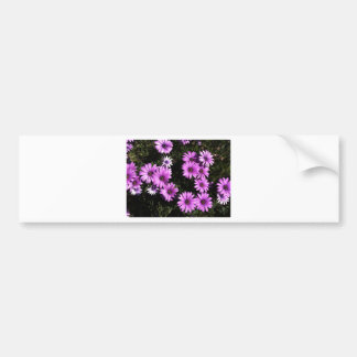 Pink Wildflowers Bumper Stickers