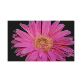 Pink Wrapped Canvas Canvas Print