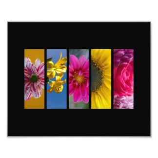Pink & Yellow Macro Flowers landscape Photo Print