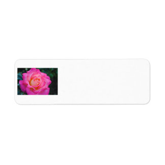 Pink & Yellow Rose Address Label