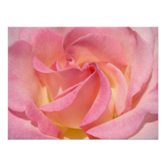 Pink Yellow Rose Flower Spiral Fine Art Prints Posters