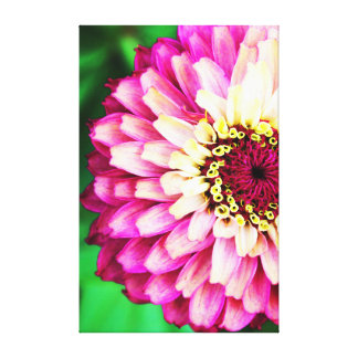 Pink Zinnia Flower Canvas