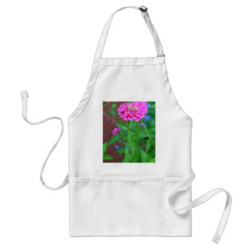 Pink Zinnia with a Bug Apron