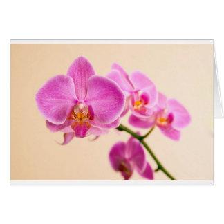Pinke Orchidee Karten