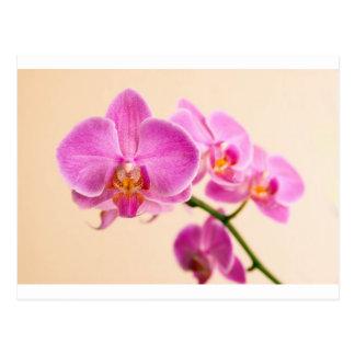 Pinke Orchidee Postkarte