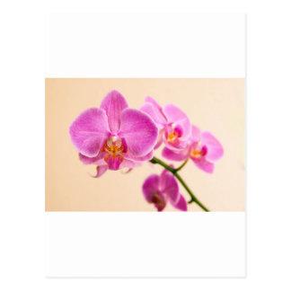 Pinke Orchidee Postkarten