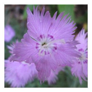 Pinks Close Garden Custom Announcement