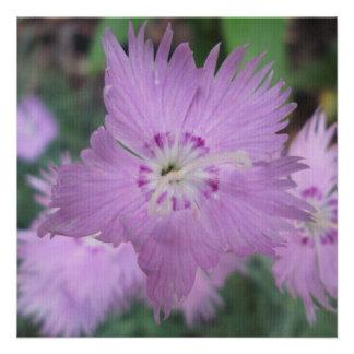 Pinks Close Garden Custom Invites