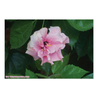 pinky flower poster