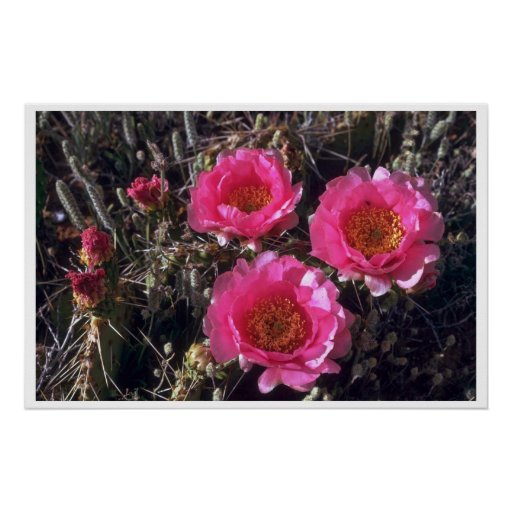 Pinky Flowers Posters