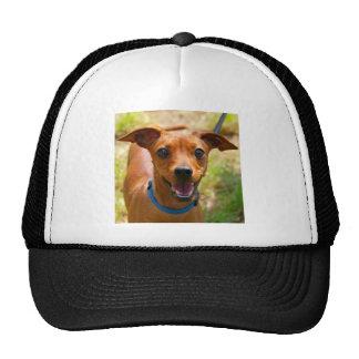 Pinscher Smiling Blue Collar Dog Trucker Hat