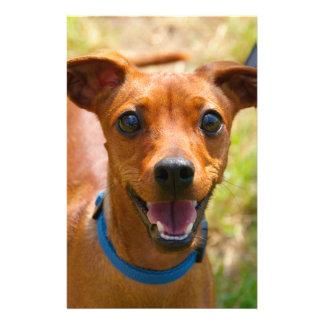 """Pinscher Smiling Blue Collar Dog 5.5"""" X 8.5"""" Flyer"""