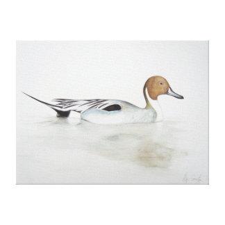 Pintail Duck 2011 Canvas Print