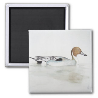 Pintail Duck 2011 Square Magnet