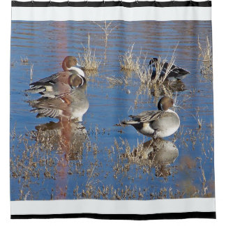 Pintail Duck Birds Wildlife Animal Pond Shower Curtain
