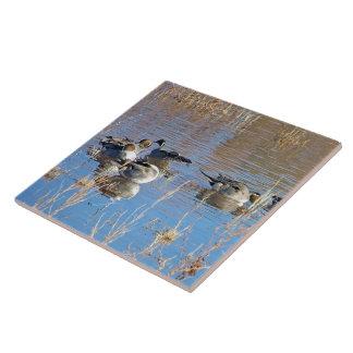 Pintail Duck Birds Wildlife Animals Tile