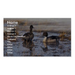 Pintail Duck Pair Double-Sided Standard Business Cards (Pack Of 100)
