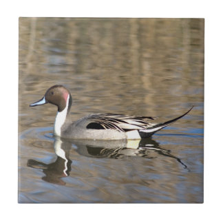 Pintail Duck Swims In A Pond Small Square Tile