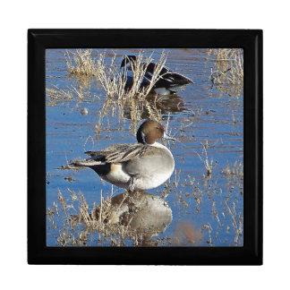 Pintail Ducks Gift Box
