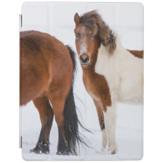 Pinto Colored Icelandic Horse iPad Cover