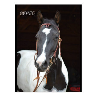 "Pinto Filly named horse post card ""Sugar"""