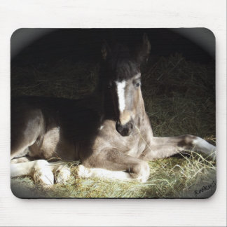 Pinto Foal Mouse Pad