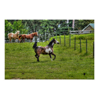 Pinto Paint & Herd Ranch Horse Equine Photo Poster