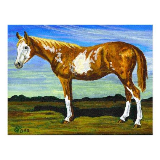 Pinto/Paint Horse Postcard