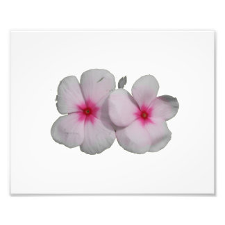 Pinwheel flower pink with natural marks photographic print