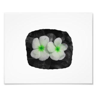 Pinwheel green circle  flower cutout photo art